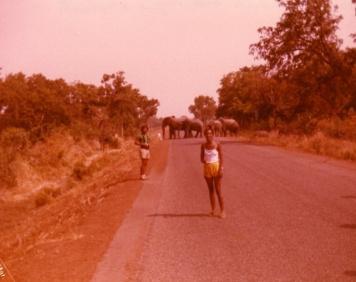 1981 Togo 021-1